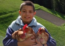 child-chicken