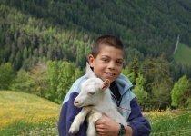 bambino-capre